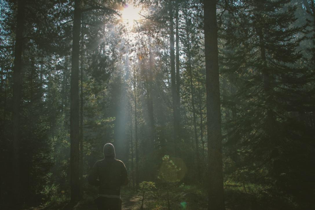 Man Forest